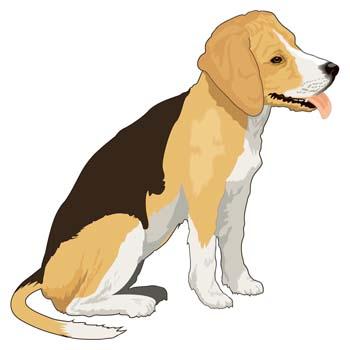 Doggie Parfait