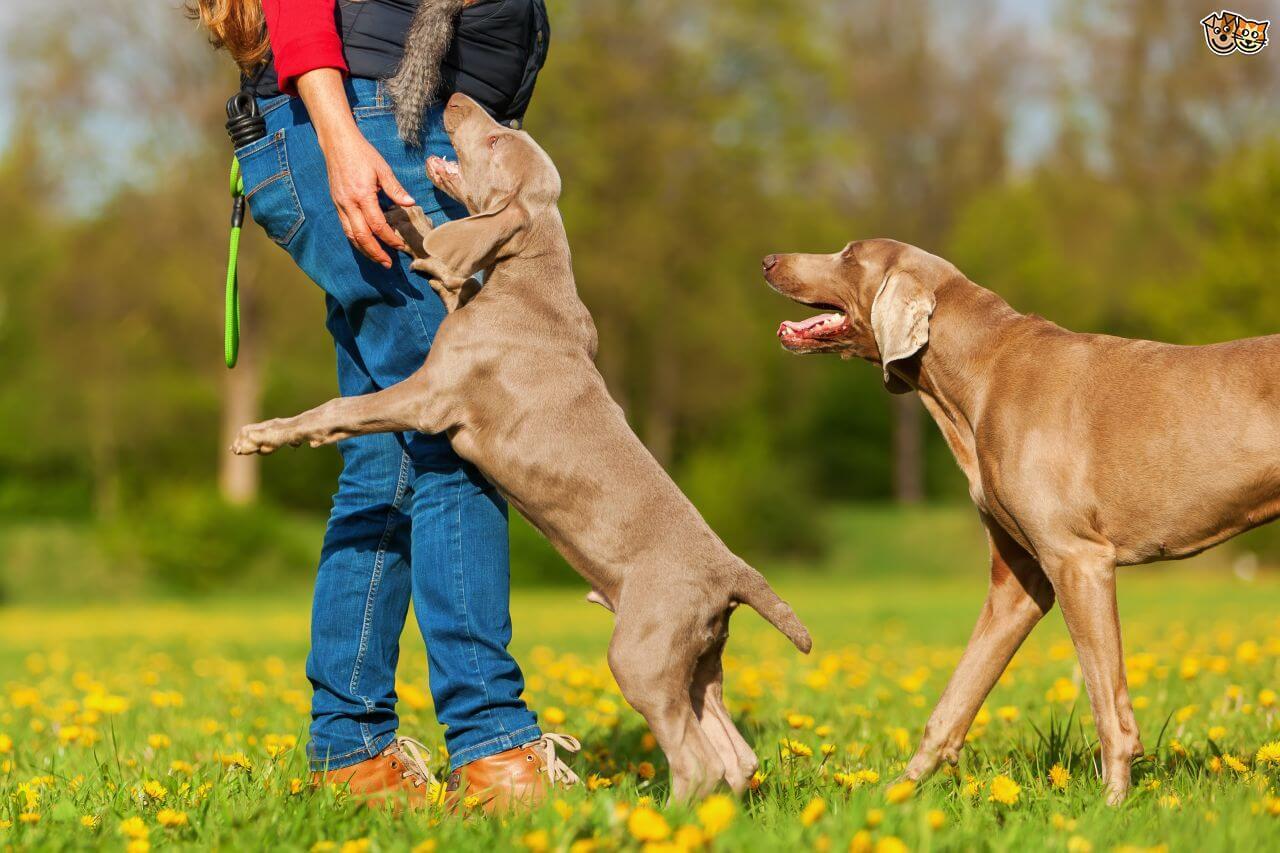 dog food, animal food, cat food, natural dog food, pet food, victor dog food near me